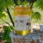 Miel d'acacia – 1kg
