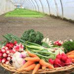 Panier de légumes pour 4 personnes environ 3-4kg