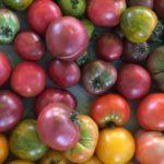 Assortiment de tomate ancienne 1kg