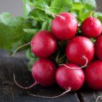 radis rouge